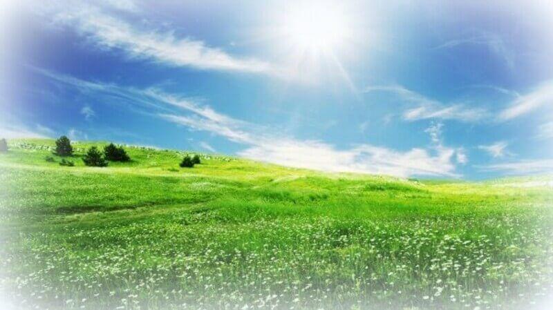 pradera verde orgonangel
