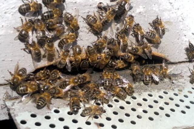 orgonitas protegiendo a las colmenas - orgonangel
