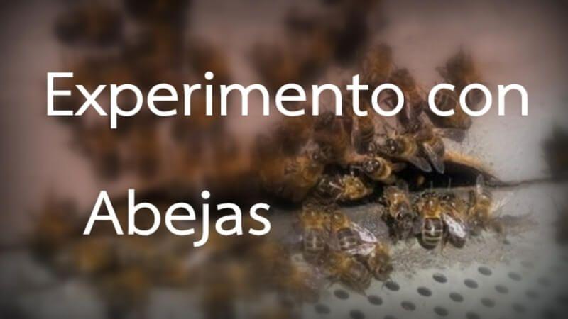 experimento con abejas orgonangel